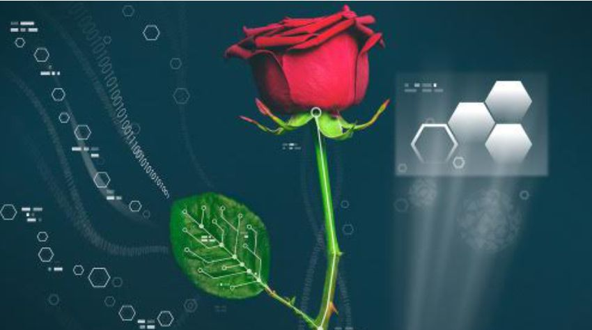 plant_electronics_insights_success