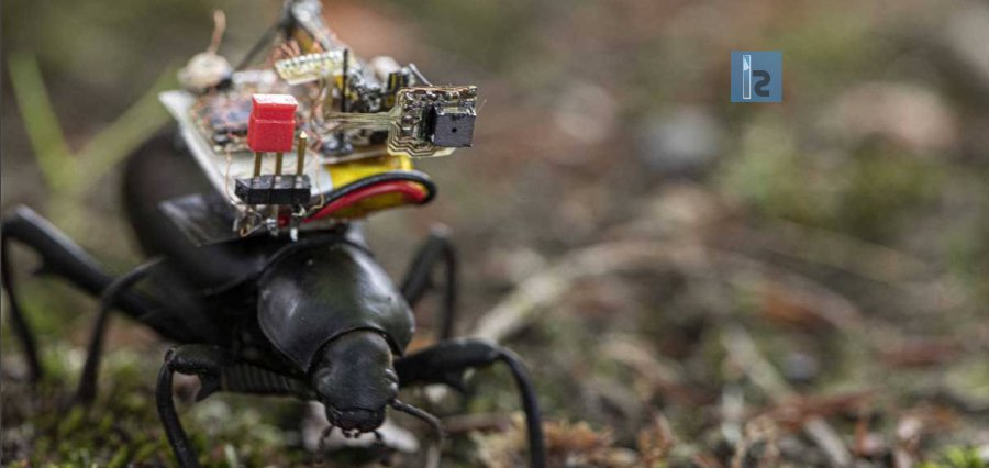 A Tiny Wireless Camera Developed by Team at University of Washington Streams Insect Adventures