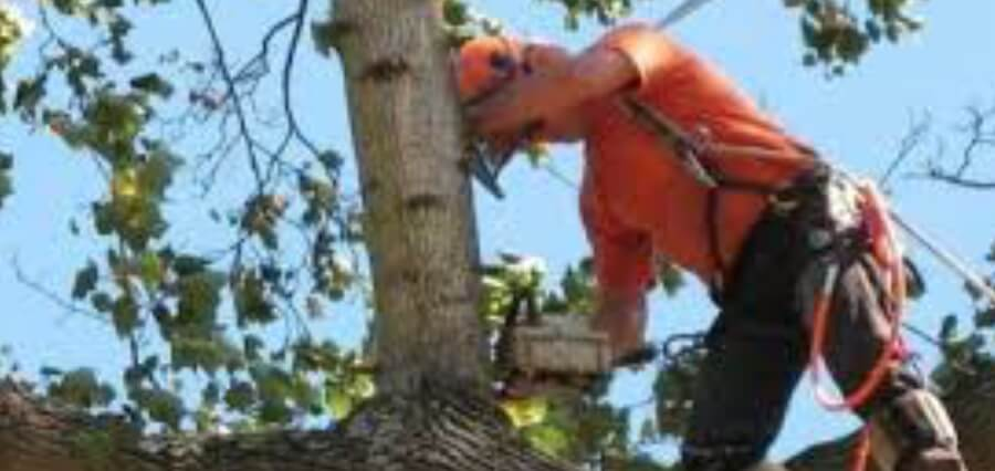 professional tree service experts.