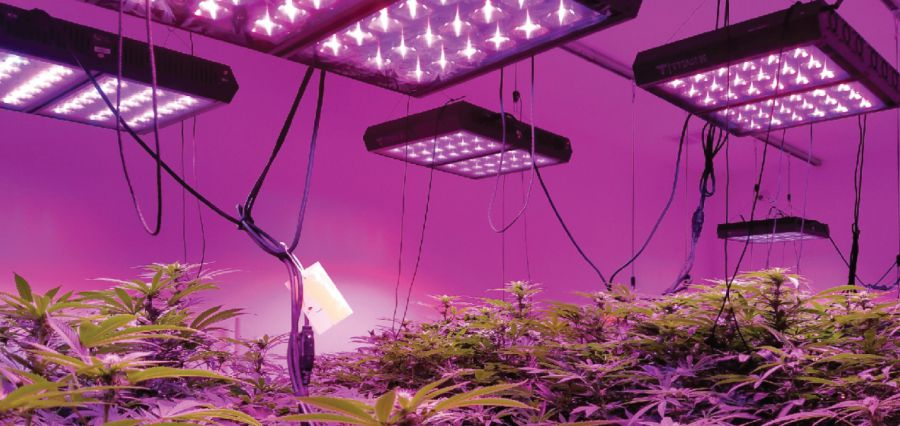 Purchasing Cannabis
