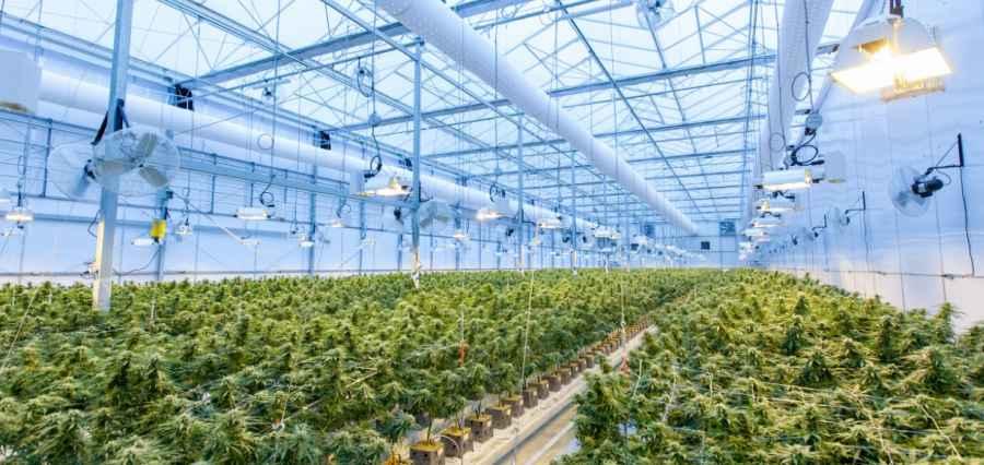 Cannabis Business Opportunities